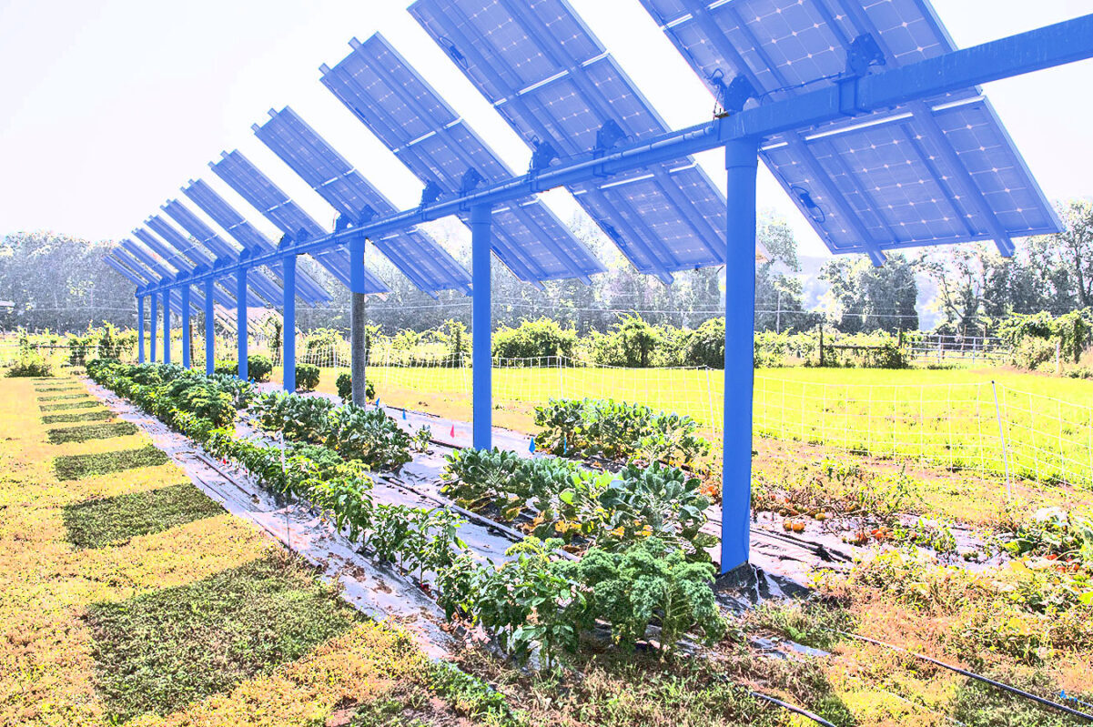 Is Solar Agriculture Able to Save the Modern Farming Industry?